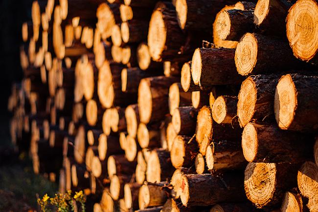 Pile of Logs image